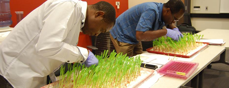 Group from Ghana Train at Seed Science Center